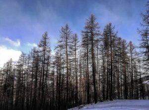 fraiteve-san-sicario-bosco